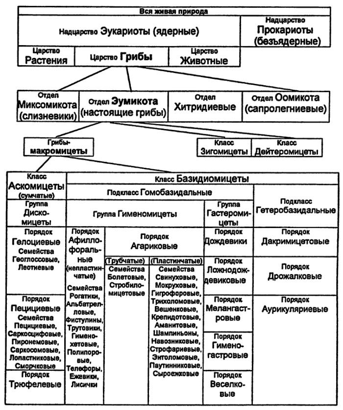 Классификация живых организмов схема